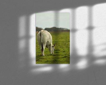 Kuh von Michelle van Doorn