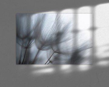 Nahaufnahme eines Morgensterns von Alex Dallinga