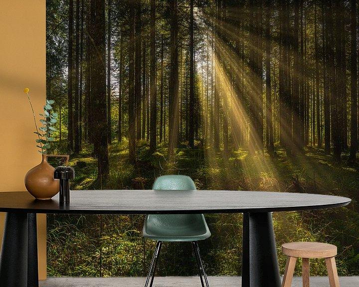 Beispiel fototapete: Sonnenstrahlen im Herbstwald von PhotoArt Thomas Klee