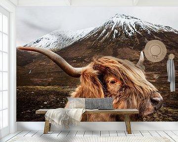 Schotse hooglander van Studio Daniell