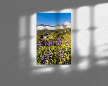 Landschaft bei Sao Vicente auf Madeira - Portugal von Werner Dieterich