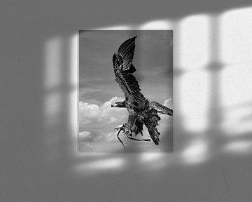 Adler im Flug - Schwarz/Weiss von Jessica de Vries