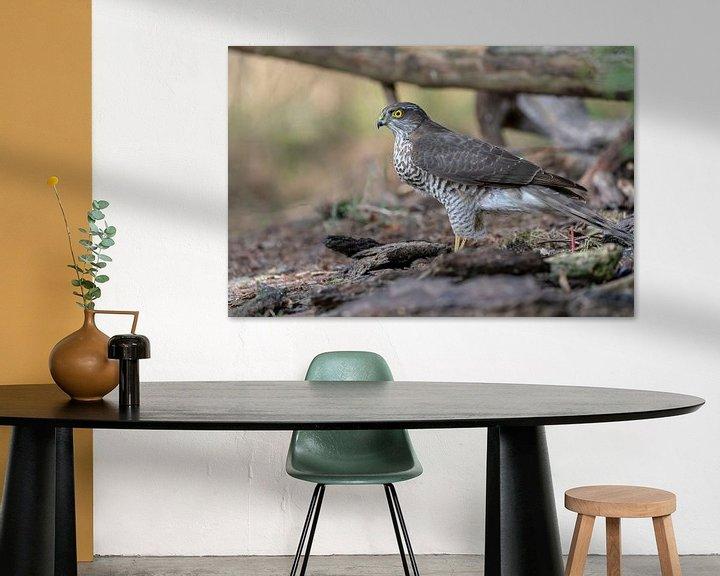 Sfeerimpressie: Sperwer Roofvogel van Rando Kromkamp