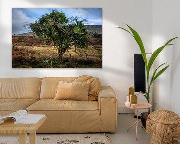 Mooie sprookjesachtige boom in Ierland van Bo Scheeringa Photography