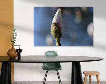 Magnolien im Knospenstadium von Eline Bouwman