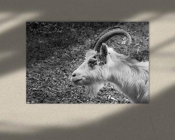 Nahaufnahme in Schwarzweiß von einer Ziege von Patrick Verhoef