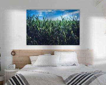 Nederlands landschap met blauwe lucht boven een maisveld van Suzanne Schoepe