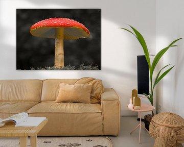 Rood met witte stippen paddenstoel op een zwart witte achtergrond van JM de Jong-Jansen