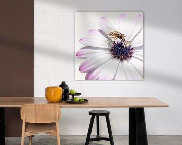 Blume von Lieke Doorenbosch