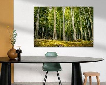 Bambuswald von Zsa Zsa Faes