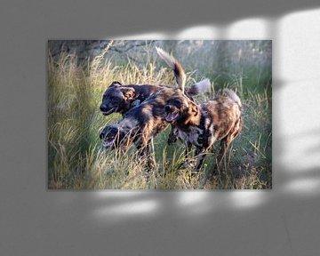 Wildhunde in der Abendsonne von Britta Kärcher