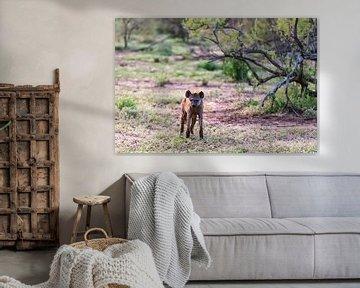 Afrikanische Hyäne von Britta Kärcher