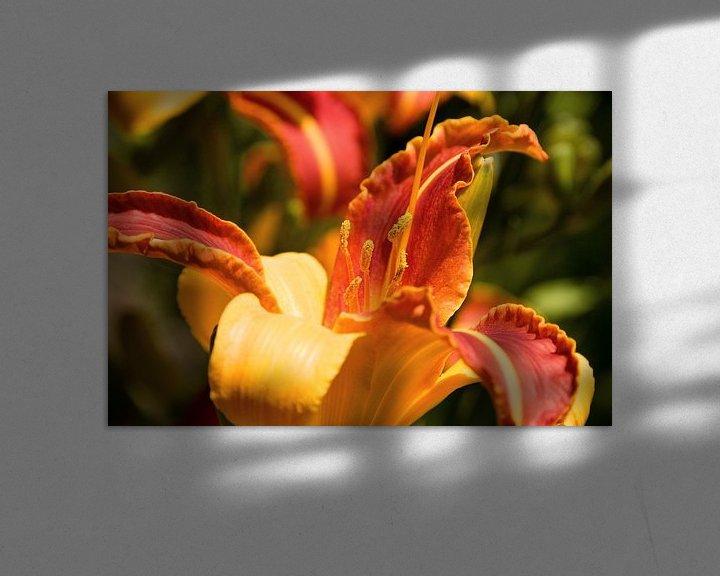 Sfeerimpressie: Daylily van Peter Baier