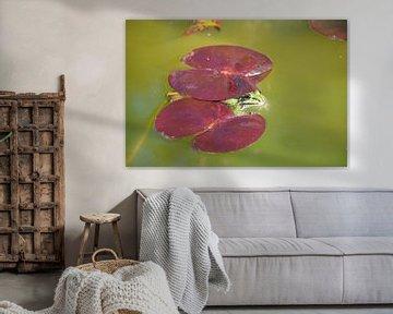 Der Frosch iin unserem Teich von Peter Baier