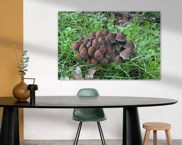 Pilze auf Holzspänen von Bernard van Zwol