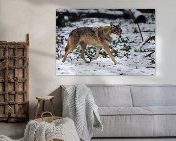 Der Wolf im Schnee von gea strucks