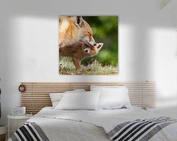 Moeder vos met haar welp  von Menno Schaefer