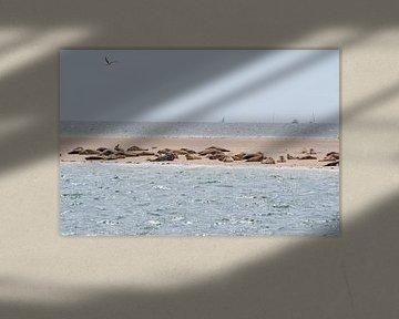 Robben im Wattenmeer von Merijn Loch
