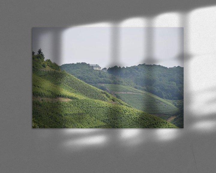 Sfeerimpressie: wijnveld in het rheindal van Jeroen Franssen