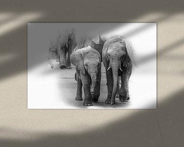 Eine Elefantenherde mit kleinen Elefanten in der Mitte. von Gunter Nuyts