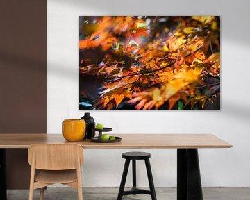 Herbstimpression von Danny Tchi Photography