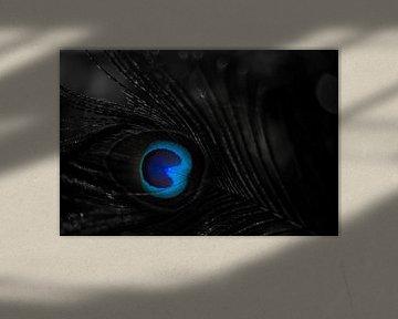 Eye, Strauss,