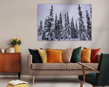 Besneeuwde bomen in Lapland van Lucas Planting