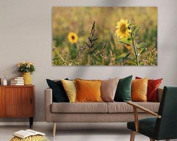 Sonnenblumenfeld in Friesland von Petra Kroon