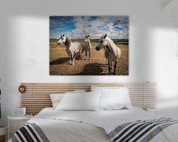 Pferde auf einer Wiese, in Wales von Art By Dominic