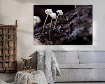 Drie witte paddenstoelen op een stuk schors van Studio de Waay