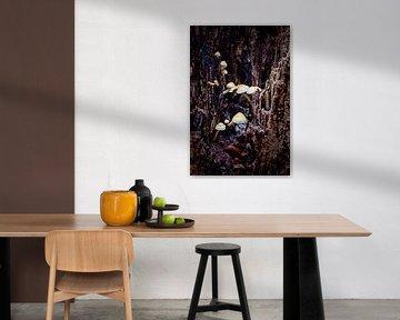 Eine Gruppe von Pilzen in einer Felsspalte eines verrottenden Baumes von Studio de Waay