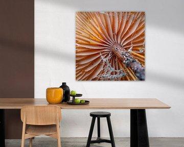 Das Licht fällt durch den orangefarbenen Pilz von Studio de Waay