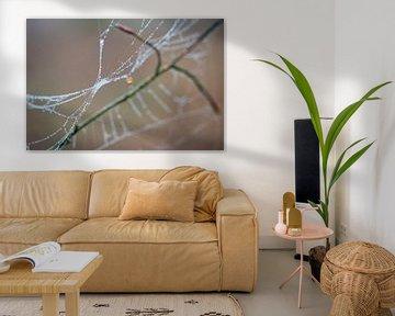 Die Tautropfen färben die Fäden der Spinnweben in von Studio de Waay