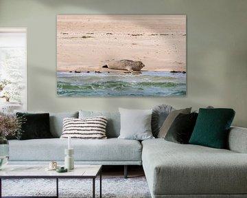 Robbe auf einer Sandbank von Merijn Loch