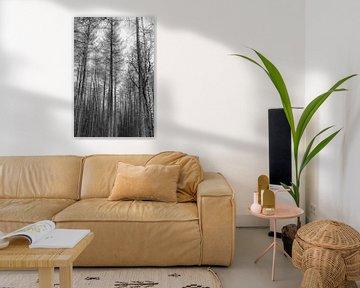 Nackte Kämme schwarz-weiß von Anouschka Hendriks