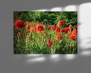 Mohnblumen von FotoGraaG Hanneke