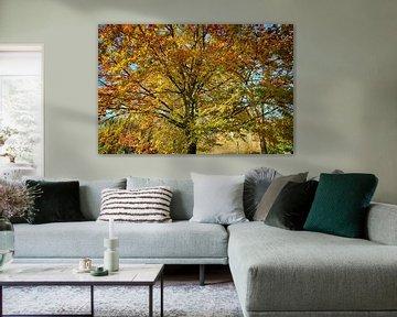 Baum in Herbstfarben von FotoGraaG Hanneke