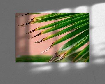 Grünes Palmenblatt auf rosa Hintergrund von Simone Neeling