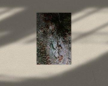 Kleurrijke boomschors van een Japanse boom van Simone Neeling