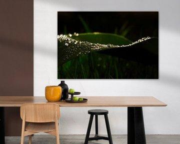 Waterparels op groen blad van Tobias Majewski