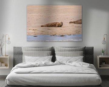 Jonge zeehond op de zandbank van Merijn Loch