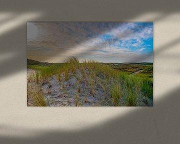 Strandhafer auf der Düne von Terschelling von Merijn Loch
