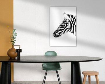 Zebra in schwarz-weiß von BBas Fotografie