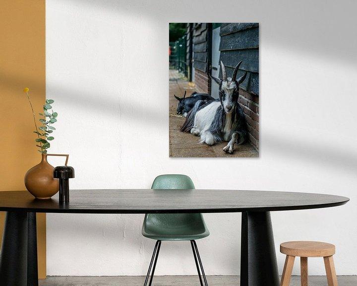 Sfeerimpressie: Chill Goat van Andre Klooster