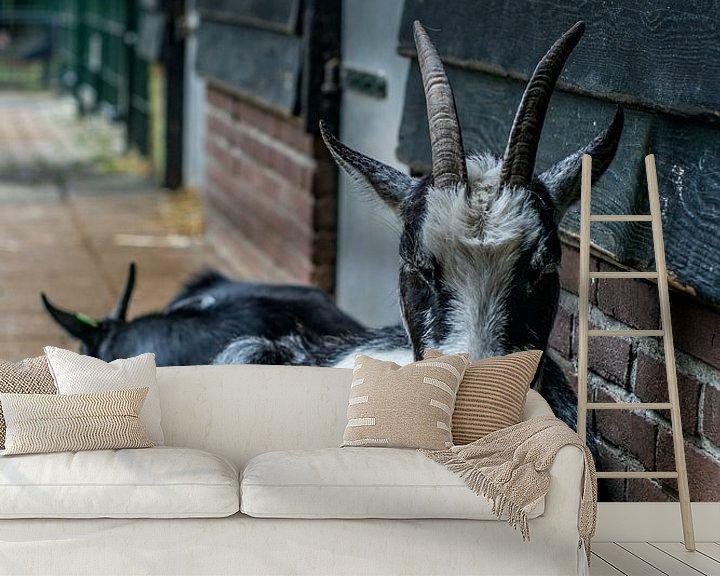 Sfeerimpressie behang: Chill Goat van Andre Klooster