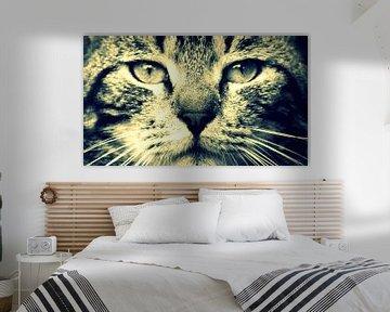 Katze von Libor Oosterhuis