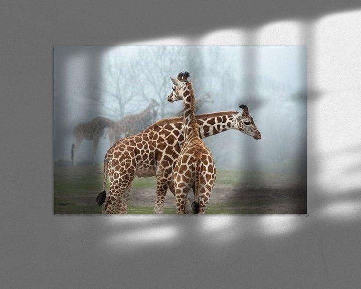Beispiel: Giraffen von Dennis Claessens