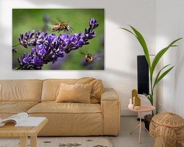 Lavendel und Bienen von Dennis Claessens