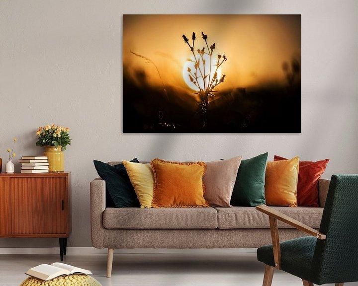 Impression: Une plante avec le soleil en arrière-plan sur Frank Herrmann