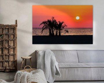 Palmen am Meeresstrand im Sonnenuntergang